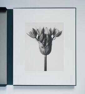 Urformen der Kunst portfolio