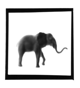 Elephant, from The Animals Series