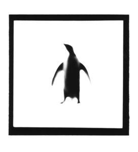Penguin, from The Animals Series