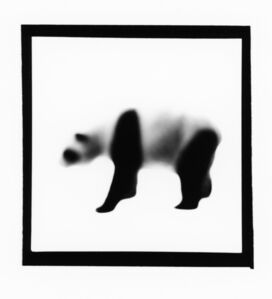 Panda, from The Animals Series