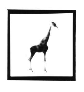Giraffe, from The Animals Series