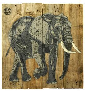 Bébé Eléphant