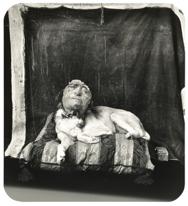 Dog on a Pillow, Marseilles