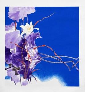 Purple White Lotus