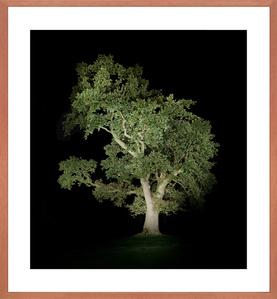 Baum #5