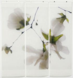 Star Magnolia No. 8