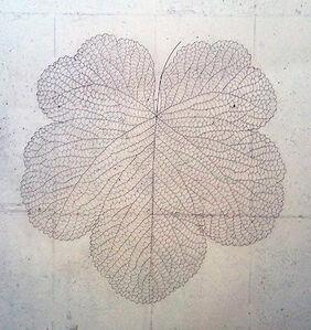The Leaf 132160