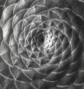 Succulent: Aeonium Tabulaeforme, California