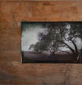 Éloge de l'arbre