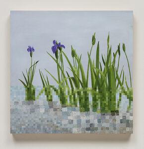 Irises Kinkaku-ji