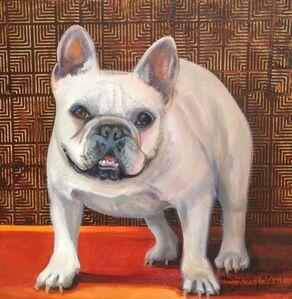 Fancy Frenchie (French Bulldog)