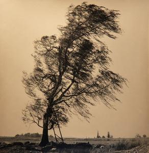 Tree with Wind, Czech Republic