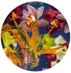 Aqua Flora no.003