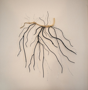 Roots or Branches?