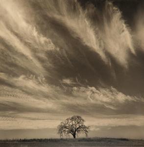 Oak With Clouds, California