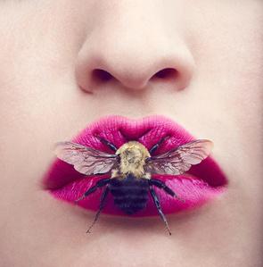 Beauty Bug