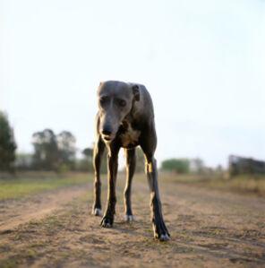 Untitled (Stray Dog)