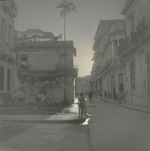 Palm Tree, Havana
