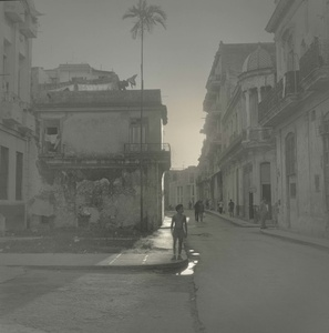 Palm Tree, Havana