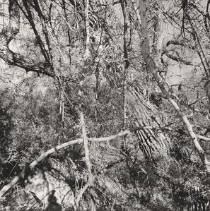 Aravaipa Creek Preserve, Arizona