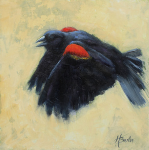 The Red Wing Blackbird
