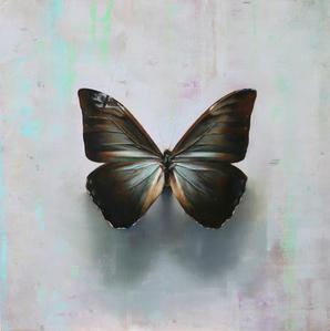 Butterfly A.a