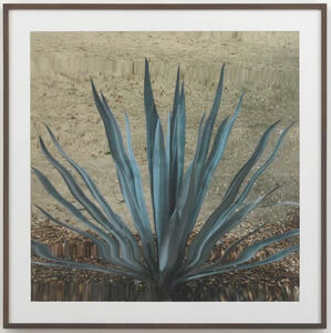 Untitled (Cactus II)