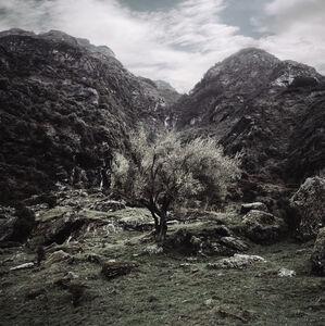 New Zealand Valley Tree