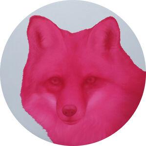 Pink Fox,