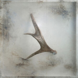 Remnant (Moose Antler)