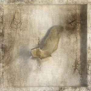 Remnant (Walrus Bone)