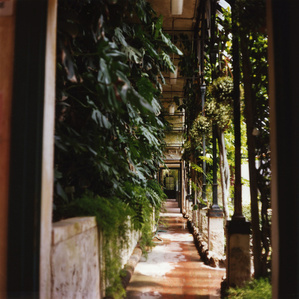 Padua Botanical #9