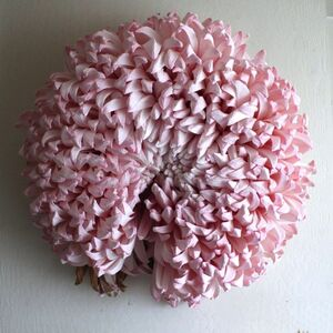 Chrysanthemum (The Wilt)