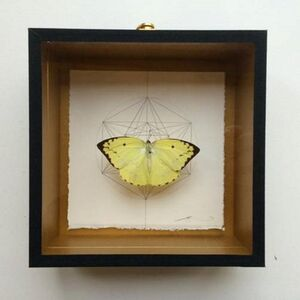 Geometry of the Butterfly – Sand Brown