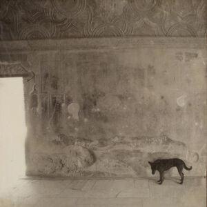 Pompeii, Stray Dog, 100 Memories