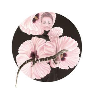 Goanna in Sturt Desert Rose - Native Mandala