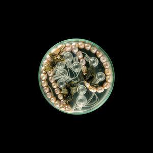 Vanitas (in a Petri dish)