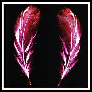 Flight of Fancy - Electric Pink