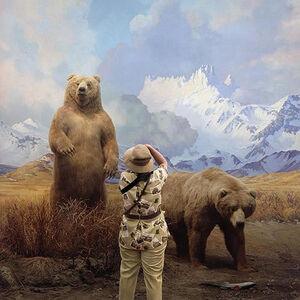 'Brown Bears'