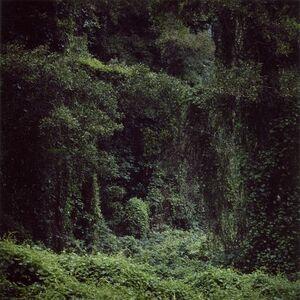 Woodland #56