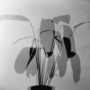 Foliages, 1960