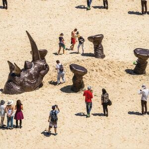 Shandu - Tamarama Beach, Sydney & Monarto Zoo, Adelaide