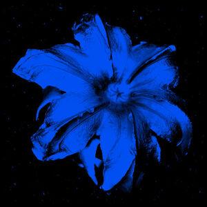 Power Flower N-5 (Blue on Black)