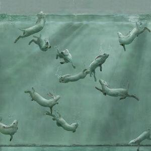 Aquarium 25