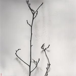 樹語 - 玉蘭 - 果殼中的宇宙