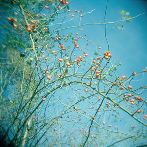 Botanics 2