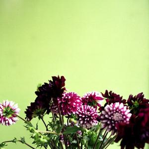 Tate, Flowers