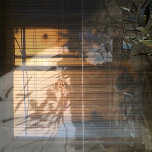 Window with Olive Tree