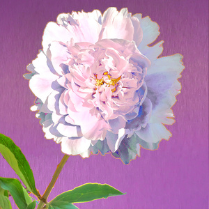 Peony with Leaves