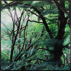 The Green Forest
